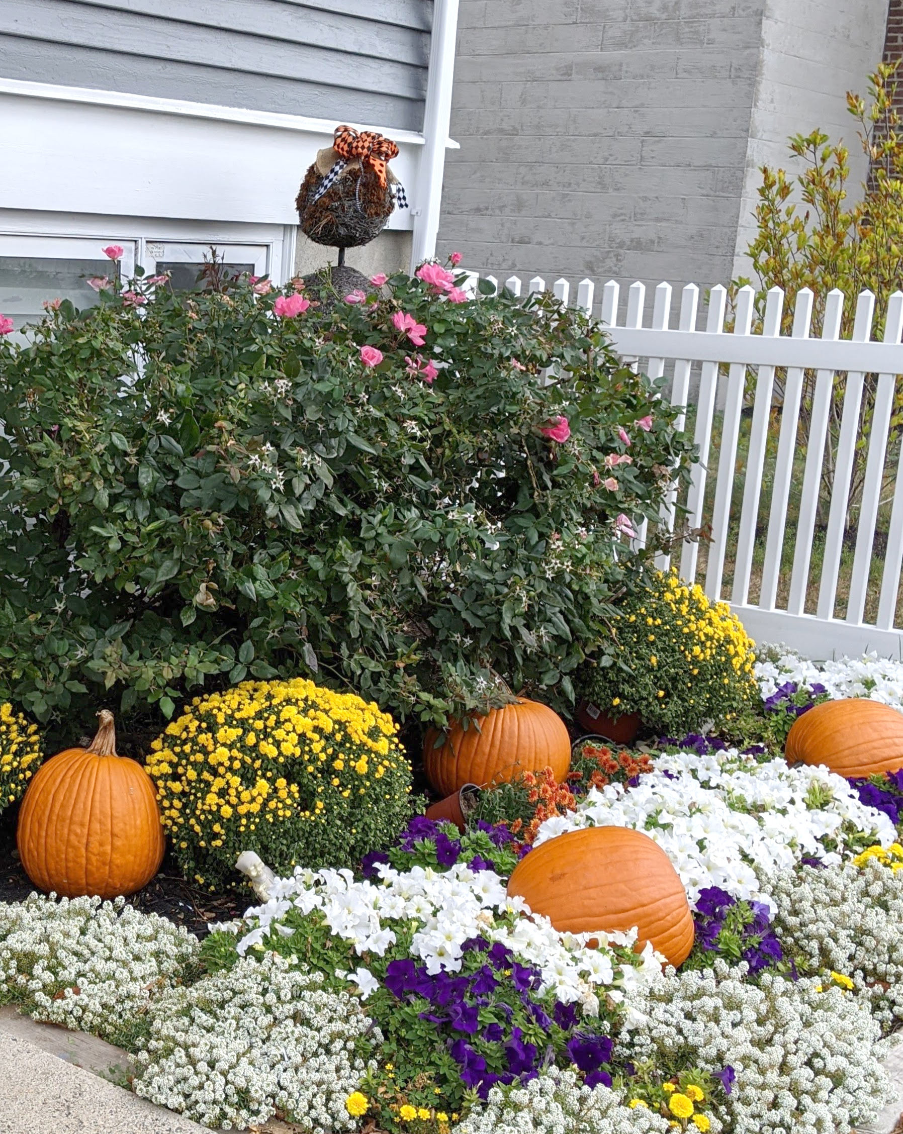 Pumpkins and mums decorate a yard for fall.